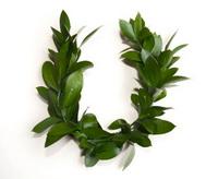 зеленая свадьба - только поженились
