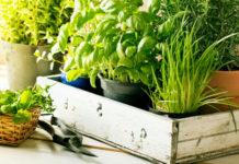вырастить зелень дома